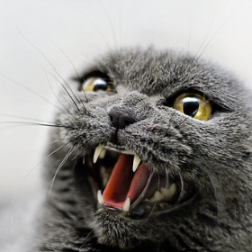 кот зараженный бешенством