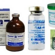 Эффективные антибиотики для кошек. Дозировки, побочные эффекты.