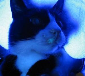 лишай у кошек: симптомы