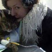 """Антивирус """"Витафел"""" для кошек. Показания к применению"""