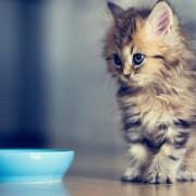 Какие отзывы оставляют ветеринары, когда дело касается корма для кошек?