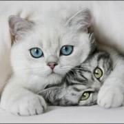 Выбираем красивые имена для породистых кошек. Запоминающиеся клички.