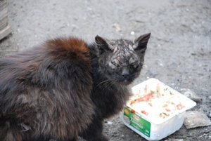 фоспренил для кошек