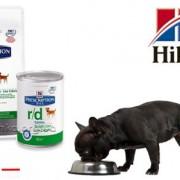 """Каким должно быть правильное питание для собак: сухой корм """"Хилс""""."""