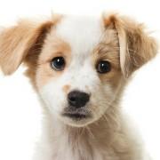 Какие породы собак наиболее подходят для содержания в квартире?