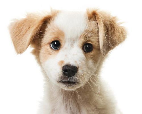 фото собак скачать бесплатно