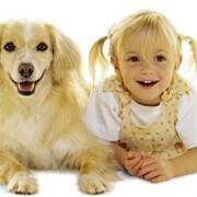 Какие таблетки от глистов для собак будут наиболее эффективными?