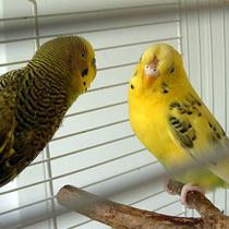 самка и самец