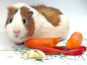 свинка и еда
