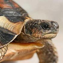 уход за сухопутной черепахой