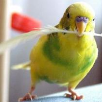 жизнь попугая