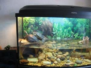 черепахи в террариуме