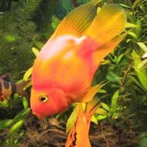 попугаи рыбки