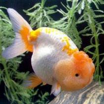 уход за аквариумной рыбкой