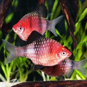 КАКИЕ СУЩЕСТВУЮТ ВИДЫ рыб