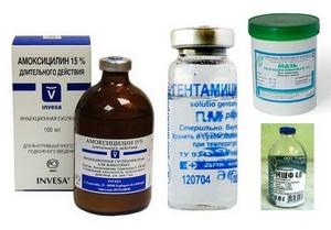 лечение кошек антибиотиками