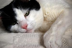 кантарен для кошек инструкция отзывы