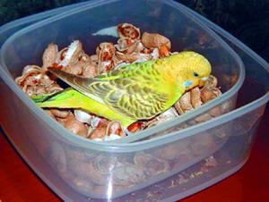 еда для попугаев