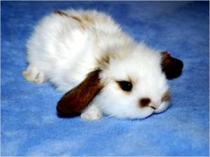 кролик дома