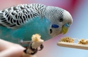 попугайчик корм