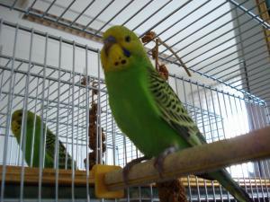 клетка попугаев