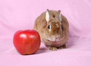 кролик с яблоком