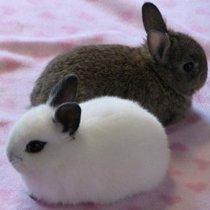пол кроликов