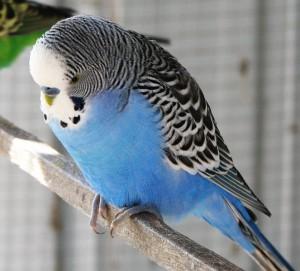 попугай болезни