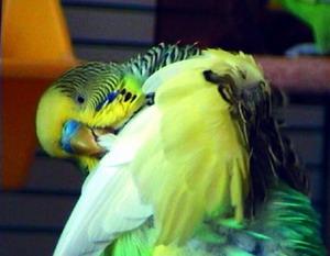 птичьи болезни