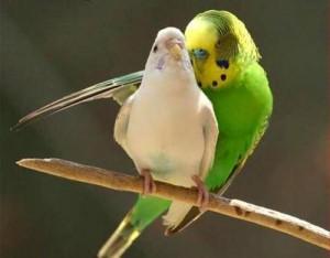 птицы размножение