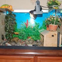 акватеррариум для сухопутной