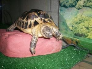 условия для черепахи