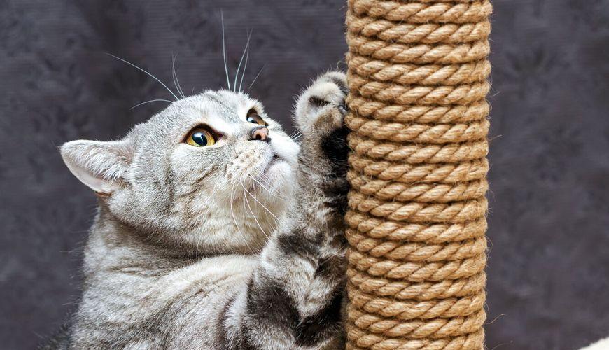 Кошка чешет когти о когтеточку
