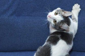 Как отучить кошку царапать диван