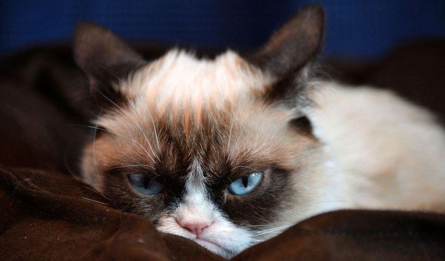Расстроенная кошка