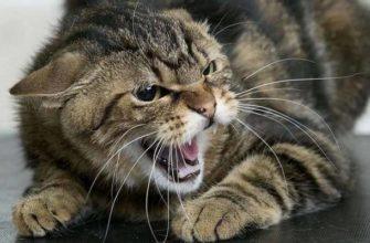 Кошка шипит на ребёнка: что делать?