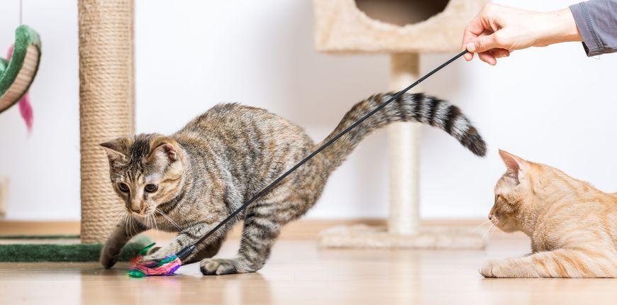 Кошка играет с игрушкой