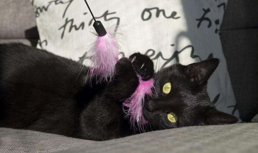 Кошка играет с пером