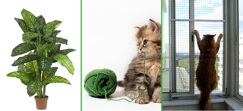 Диффенбахия, котенок с нитками и антикошки